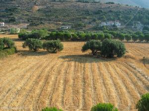 Field of harvest