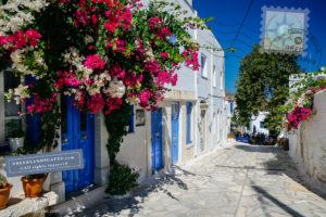 Bougainvillea blooming over door at Pyrtos town in Tinos
