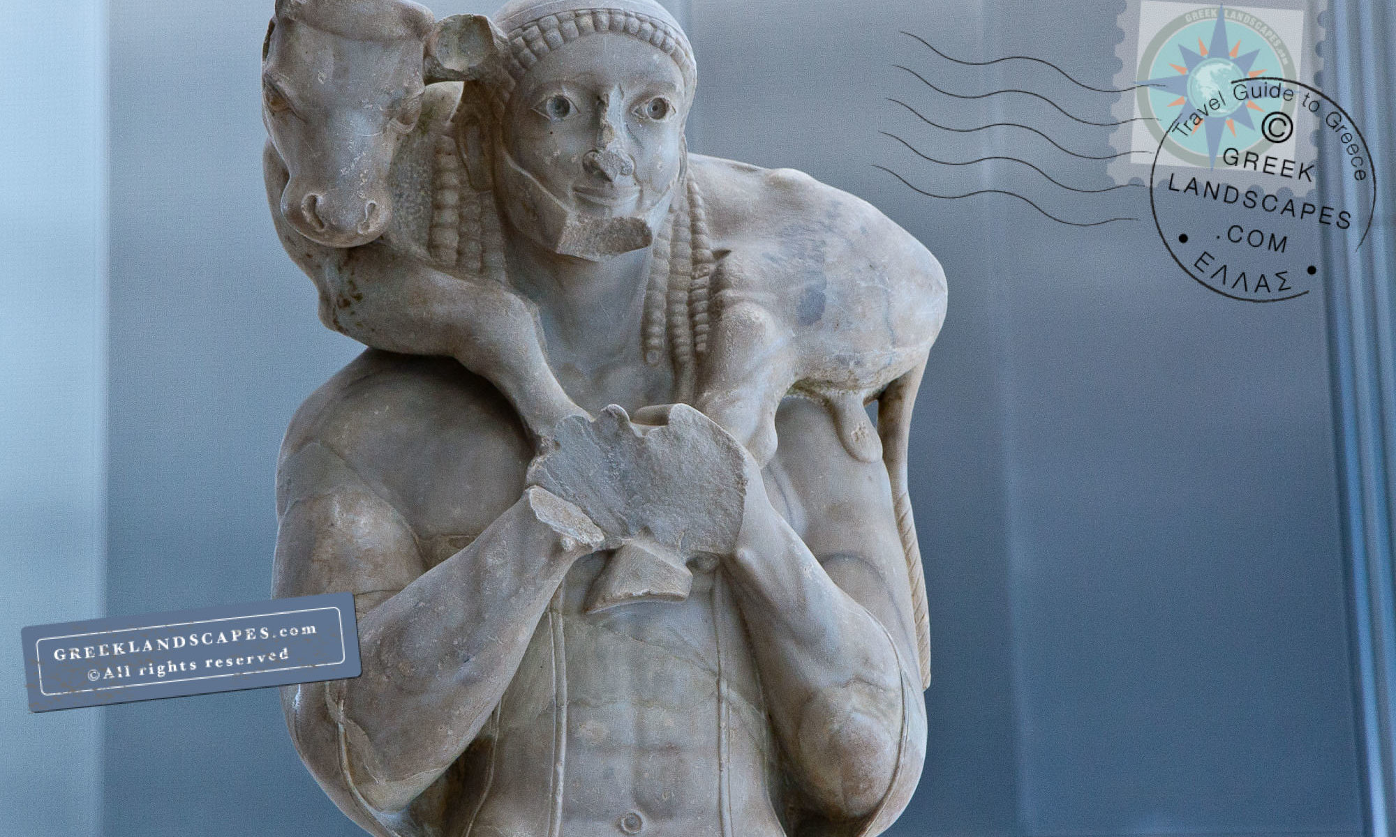 Upper part of the Moschophoros statue depicting a man carrying a calf on his shoulders