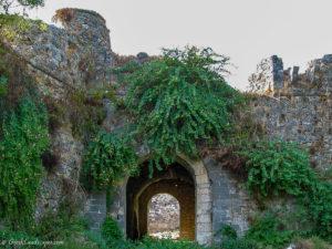 Castle gate overgrown with vegetation