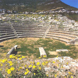 Yellow wild flowers in front of Messene theatre ruins.