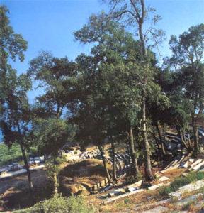 Trees around the theater of Thassos